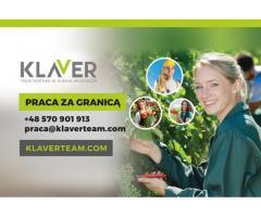 Produkcja sałatek- praca w Holandii bez doświadczenia