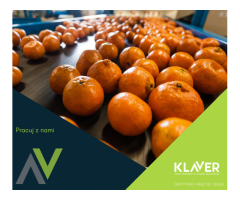 Holandia- praca od zaraz- pielęgnacja sadzonek!- dużo godzin Szukasz pracy w Holandii?