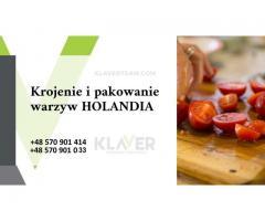 Praca w Holandii- krojenie warzyw, produkcja sałatek- praca od zaraz- bez wiekówki